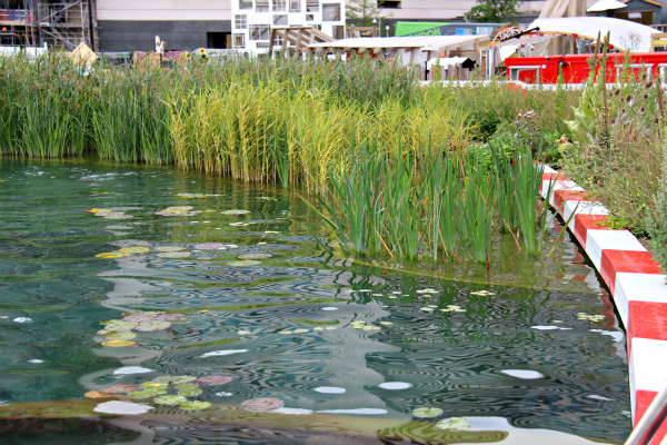 King's Cross Pond London natural swimming pool