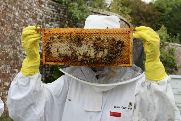 Dean's Court Dorset honey harvest