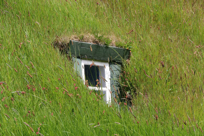 Islande Iceland vegetal roof toit vegetal window fenetre
