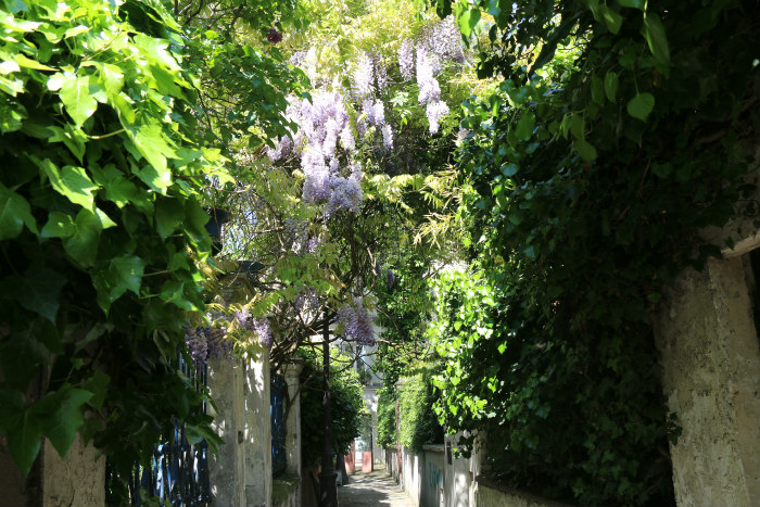 belleville paris glycine wisteria 2